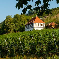 Feiern sie ihre Hochzeit auf den wunderschönen Hoflössnitz.