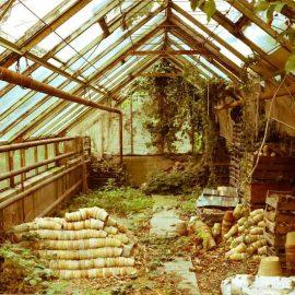Hochzeirsfotos im Gewächshaus im Hochzeits-Garten Dresden