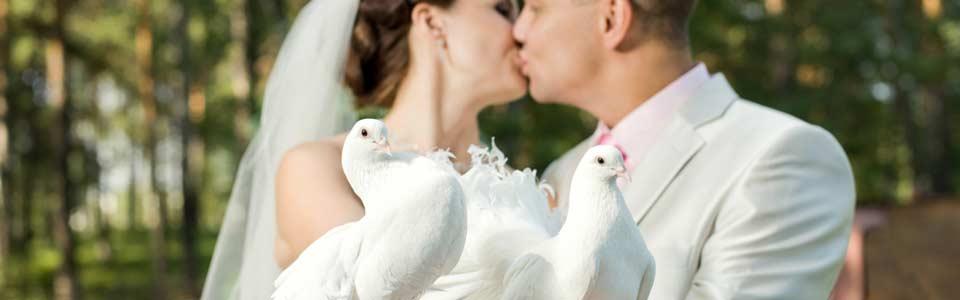 Hochzeitstauben in Dresden und Umgebung